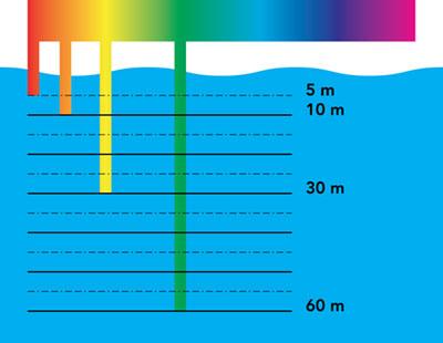 Figura 2: le varie componenti cromatiche della luce sono assorbite dall'acqua a profondità differenti. La componente rossa sparisce già dopo i primi 5 m