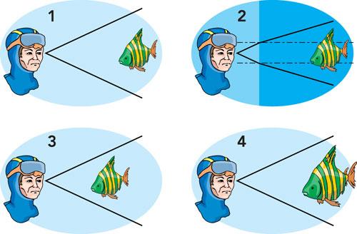 Figura 7: se il medesimo soggetto, in questo caso un pesce, viene osservato stando sulla terra ferma si ha un angolo di visione di una certa misura. Osservandolo sott'acqua, il passaggio dei raggi luminosi dall'acqua all'aria determina un angolo di visione inferiore che porta a percepire gli oggetti come più grandi o più vicini