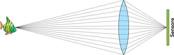 """Figura 2: un esempio di cosa accade quando una lente riprende un oggetto: i raggi luminosi riflessi dall'oggetto e che cadono sulla lente, il nostro obiettivo, sono """"convogliati"""" dalla lente verso il sensore"""