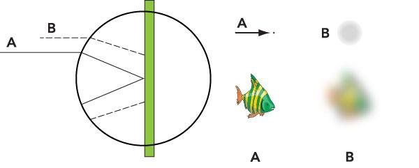 """Figura 4: esaminando in dettaglio l'immagine precedente si comprende facilmente che dal pesce in """"A"""" un punto qualsiasi viene portato sul sensore con precisione e nitidezza al contrario dei punti del pesce in """"B"""""""