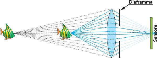 """Figura 6: quando le distanze sono simili, i punti presi in esame arrivano molto nitidi se relativi al pesciolino nella posizione """"A"""" e leggermente più sfocati se relativi a quello nella posizione """"B"""". È evidente, rispetto agli altri esempi, la maggiore nitidezza di """"B"""""""